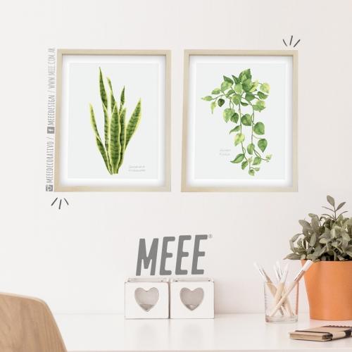 Combo Cuadros Plantas. Meee Decorativo